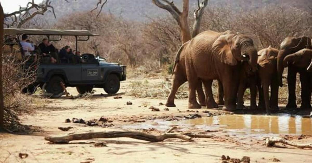 Madikwe Game Reserve Big Five Safari