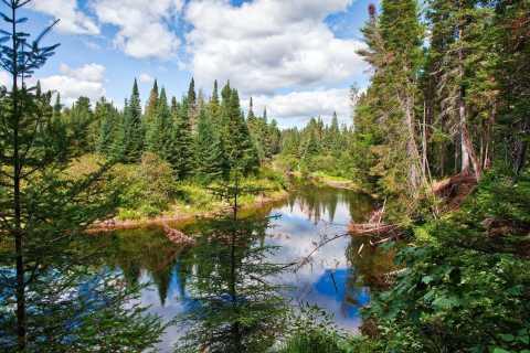 From Toronto: Algonquin Provincial Park Private Tour