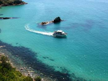 Phillip Island: 1-stündige Cape Woolamai Naturkreuzfahrt