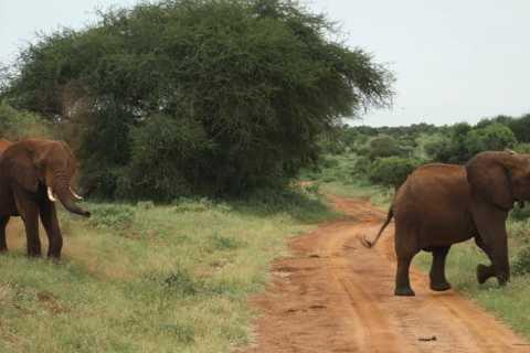 Mombasa: Tagestour zum Tsavo East National Park