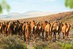 Oasis Wildlife Fuerteventura and Camel Experience