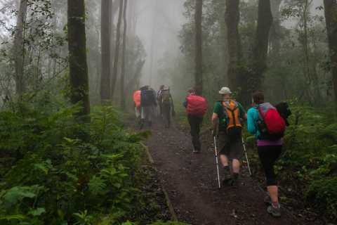 Mount Kilimanjaro National Park Day Trip