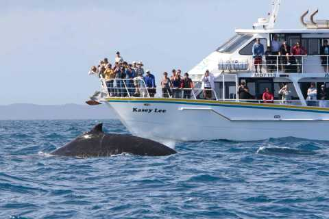 Phillip Island: Whale Watching Boat Tour with Lunch