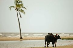 Belém: Viagem de um dia à Ilha de Marajó com visita à fazenda de búfalos