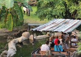 достопримечательности Лейпциг - Лейпциг: 1-дневный автобус Hop-On Hop-Off и билет в зоопарк Лейпцига