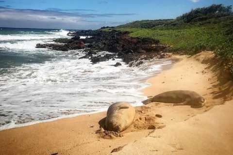 Kauai: Private Wildlife, Beach Hike with Snorkel Option
