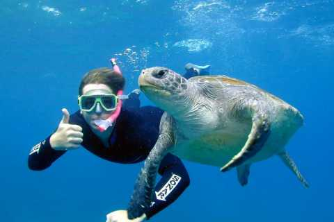 Byron Bay: Certified Dive Tour