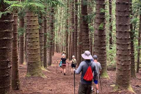 Kauai: Private Hike to Sleeping Giant with Waterfall Option