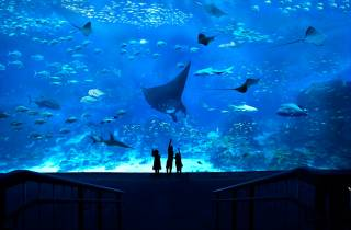 Singapur: S.E.A. Aquarium Ticket