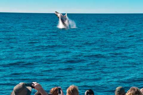 Mooloolaba: Whale Watching Cruise