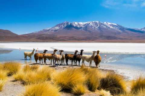 From Uyuni: Salt Flats 3-day Tour