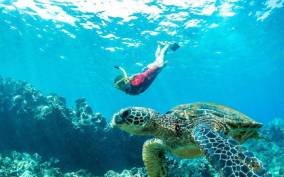 Maui Premier Snorkel Adventure & Barbecue Cruise