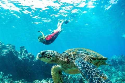 Maui Premier Snorkel Adventure & Barbecue Cruise