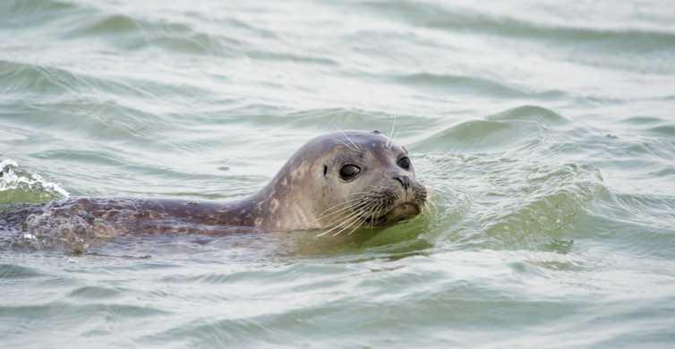 Cadzand: excursion en bateau découverte du phoque