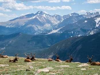 Denver: 8-stündige private Tour durch den Rocky Mountain National Park