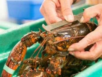 Kennebunkport, Maine: Mittags kulinarischer Rundgang
