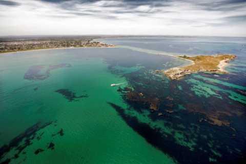 Rockingham: 1 hora Shoalwater Islands Tour e Penguin Island