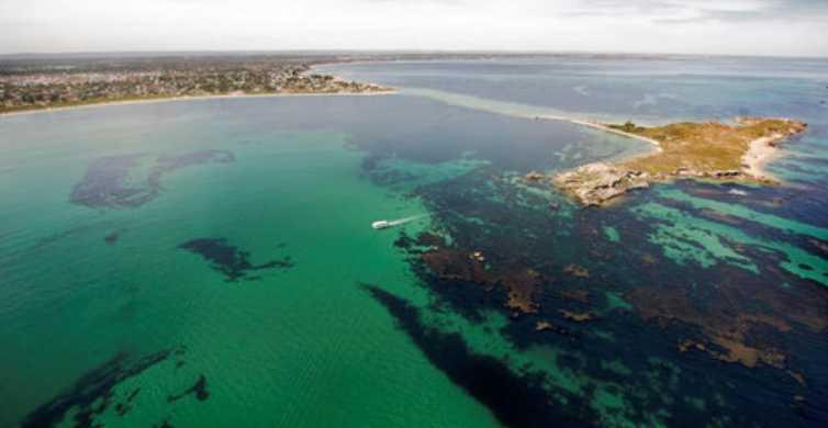 Rockingham: visite des îles Shoalwater d'une heure et de l'île Penguin