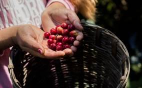 Puerto Escondido: Huatulco Traditions Tour with Coffee