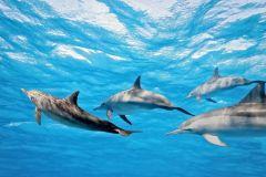 Quinta do Lorde: Nadando com Golfinhos
