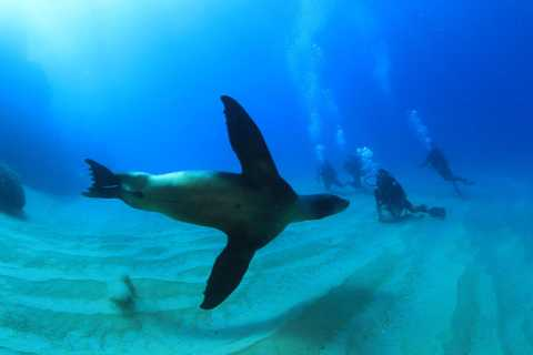 Los Cabos 3-Hour Certified Scuba Diving Tour
