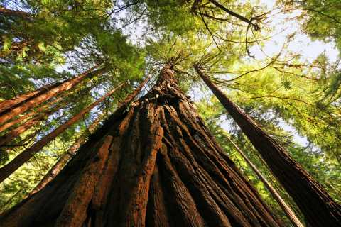 San Francisco: Private Muir Woods and Sausalito Tour