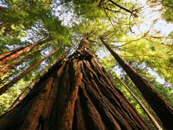 San Francisco: Private Muir Woods und Sausalito Tour