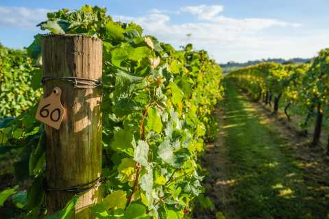 Guided Private Wine Tour to Napa and Sonoma Wine Country