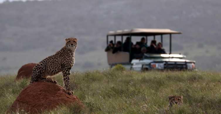Hlosi Game Lodge: Half-Day Safari with Optional Boat Cruise