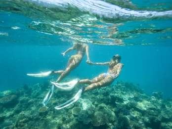Townsville: Great Barrier Reef Trip mit Schnorchel oder Tauchen