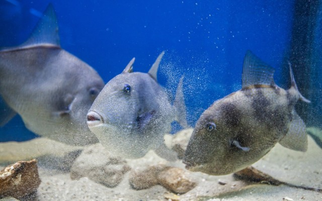 Krk: Baška Aquarium Entreeticket