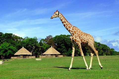 Coron: Calauit Safari Adventure