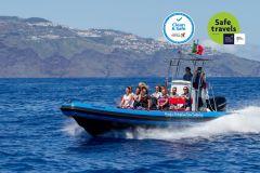 Funchal: Cruzeiro de observação de golfinhos e baleias