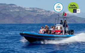 Funchal: Dolphin and Whale Watching Cruise