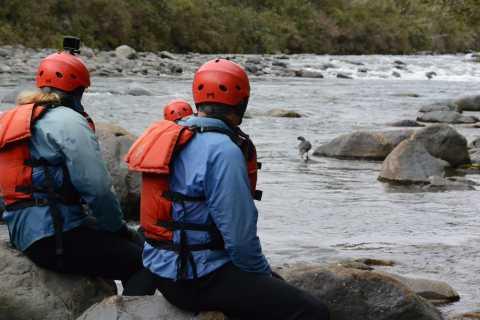 Tongariro River: Blue Duck Experience