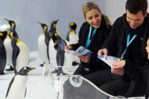 Melbourne: Penguin Passport Experience at SEA LIFE