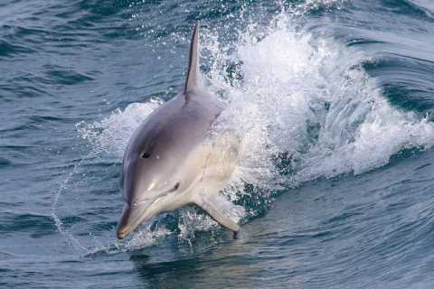 Philip Island: Dolphin and Whale Cruise