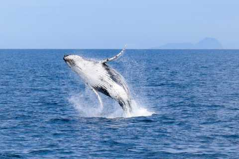 Wilsons Promontory: Whale Spotting Cruise with Lunch