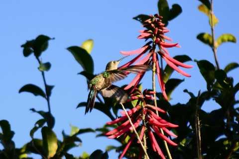 Desde Tulum: observación de aves y caminata guiada en Sian Ka'an y Muyil