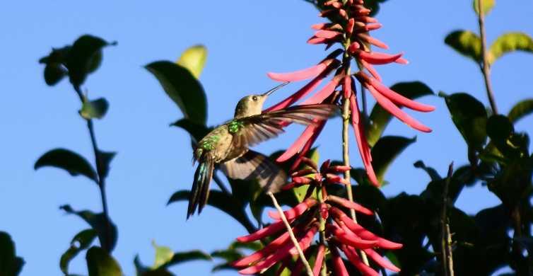 From Tulum: Sian Ka'an & Muyil Birdwatching & Guided Walk