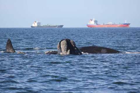 Mossel Bay: Walbeobachtung und Seal Island Bootsfahrt