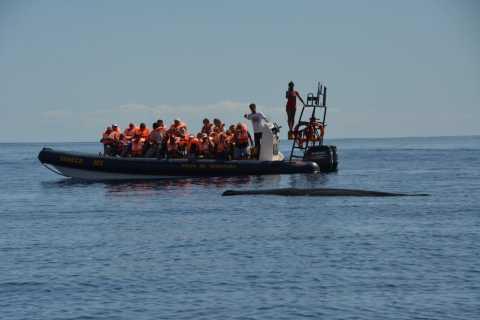 São Miguel Azores: Half-Day Whale Watching Trip