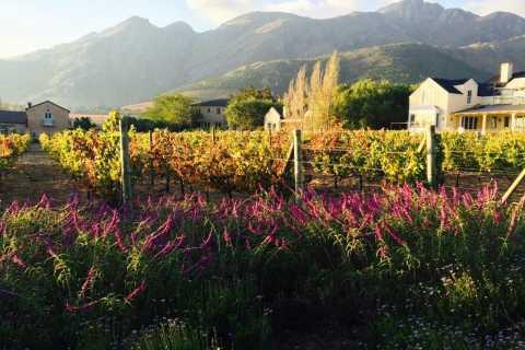 Stellenbosch: Devon Valley Vineyards Bicycle Tour w. Lunch