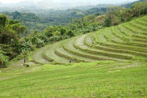 From Bohol: Private Day Trip To Anda's Rice Terrace & Falls