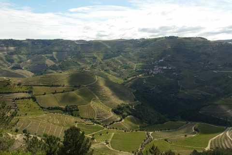 Porto: Douro Valley Hiking Tour and Boat Cruise with Brunch