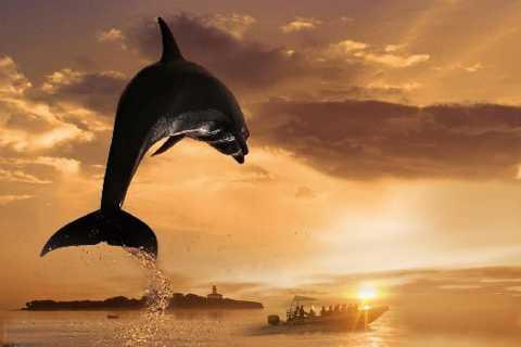 Alcúdia: boottocht kleine groep van 3 uur, kust en dolfijnen