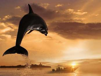 Alcudia: 3-stündige Bootstour, Küste & Delfine – Kleingruppe