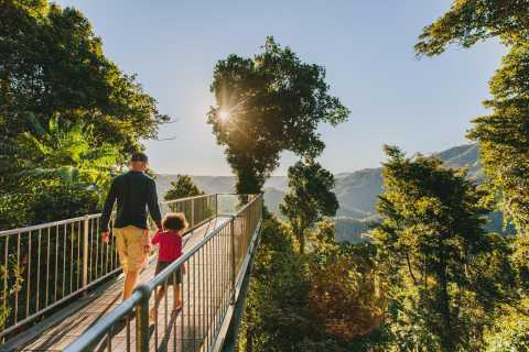 Wooroonooran National Park: Mamu Tropical Skywalk Admission