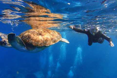 Tenerife: Snorkel with Turtles