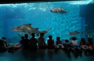 Sevilla: Ticket zum Aquarium